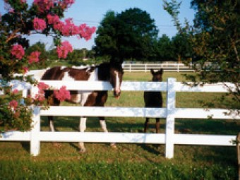 pvc_horse_fences_animal_fence.jpg_220x2205